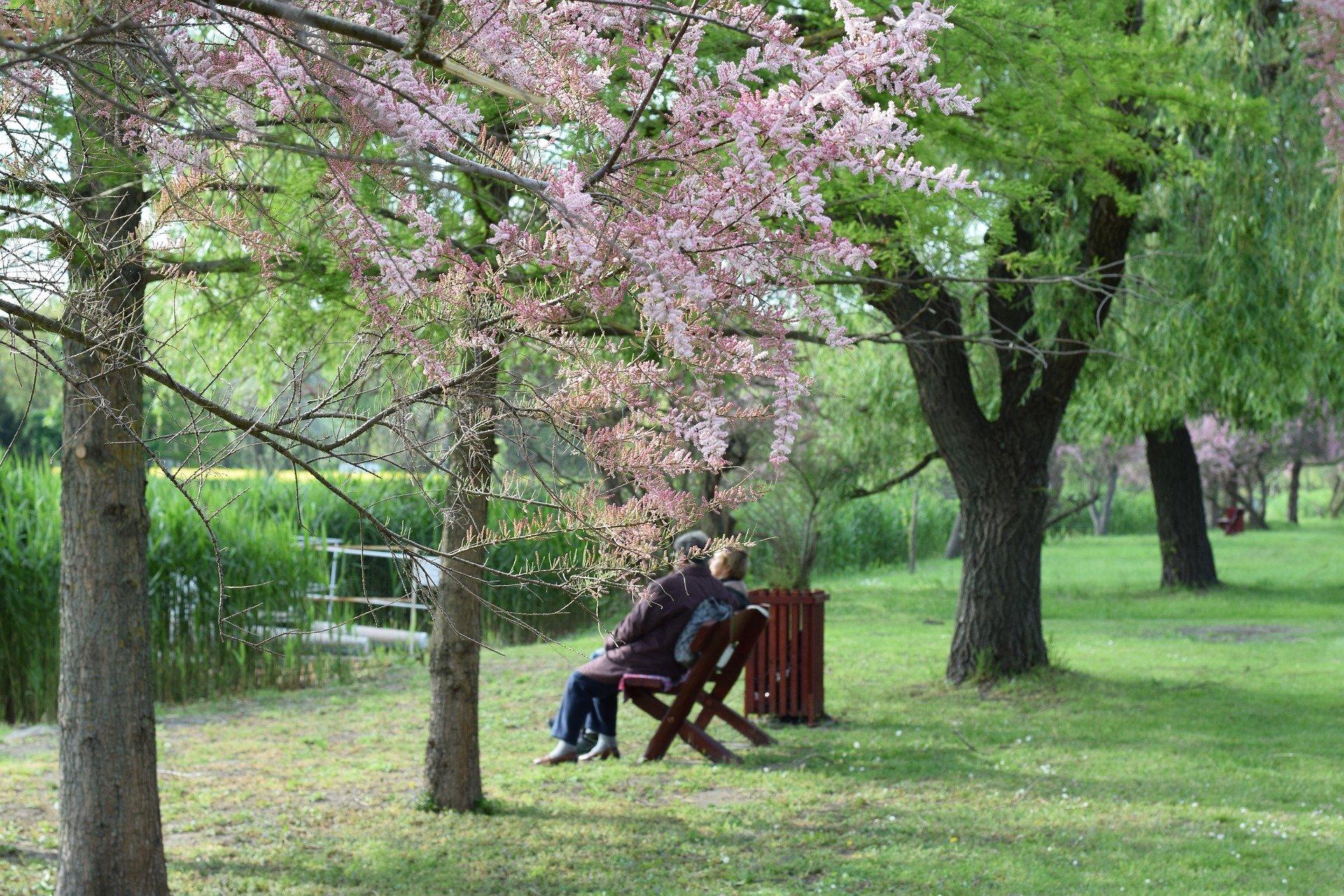 公園の老夫婦
