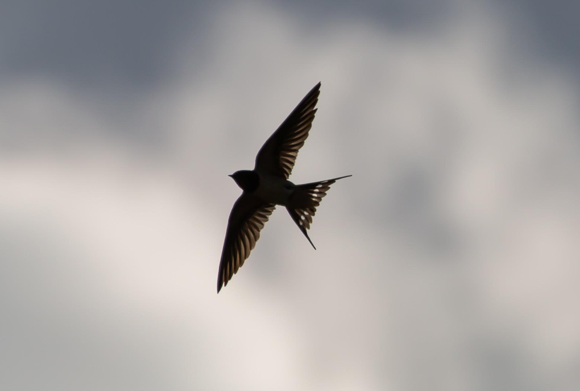 燕の旅立ち