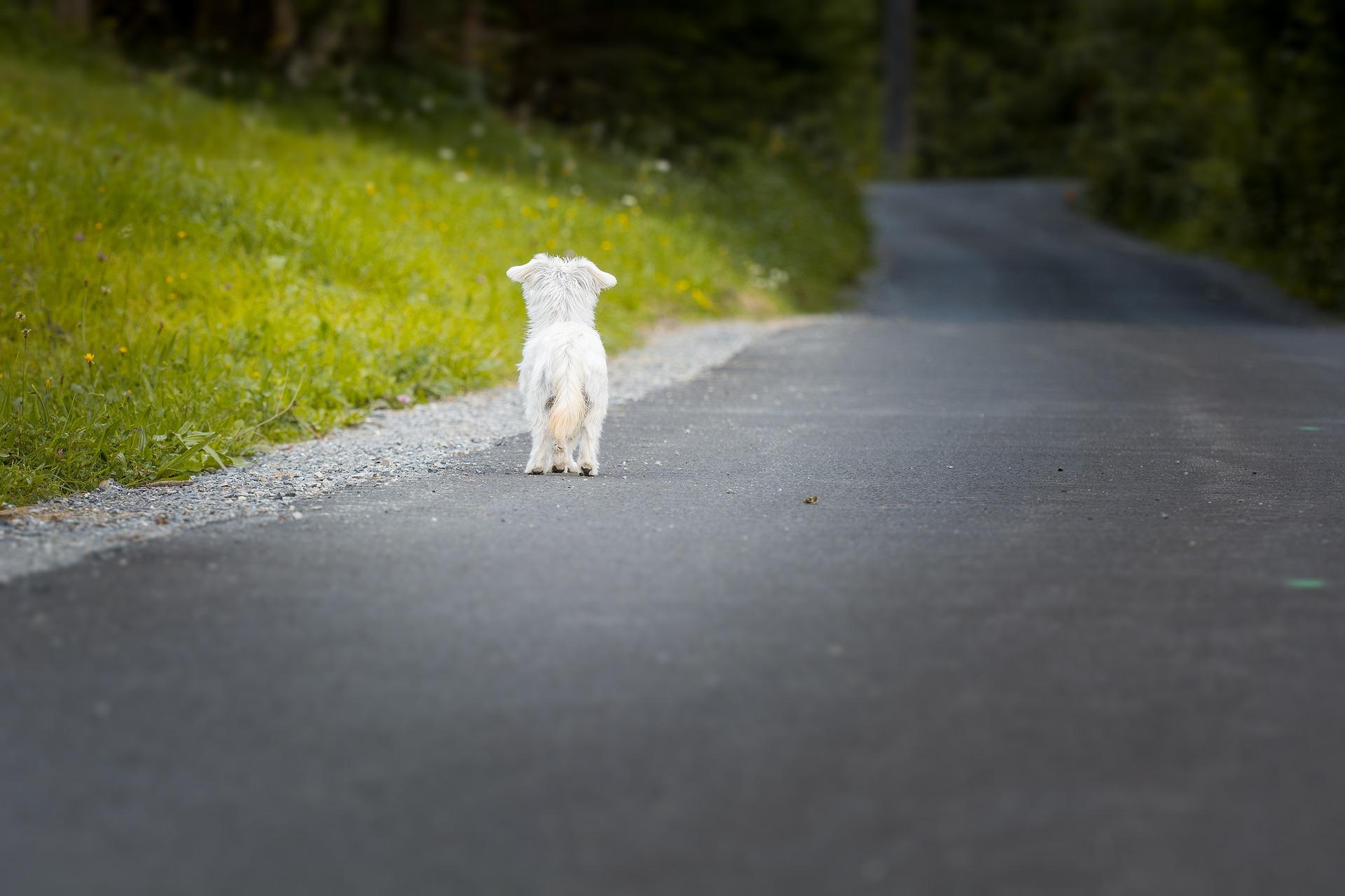 待っている犬