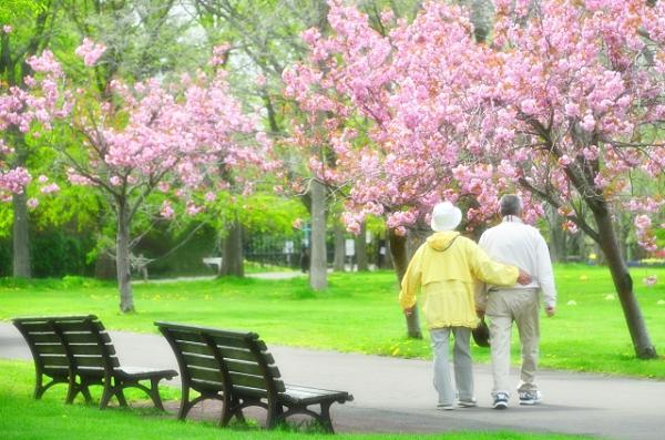 桜の咲く公園を歩く老夫婦